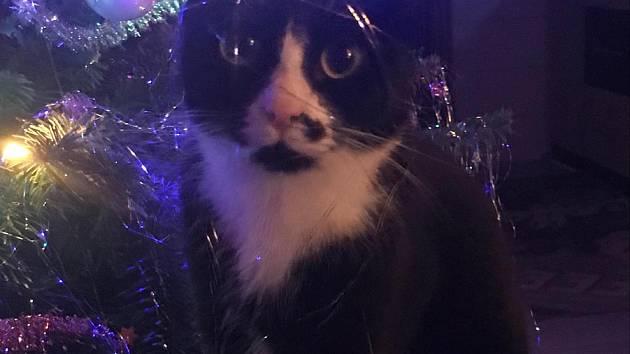 Kočka spadla i s květináčem na celou noc do kanálu. Vytáhli ji hasiči