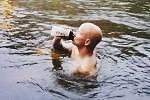 Jan Zabloudil chodí do studené vody odpočívat.