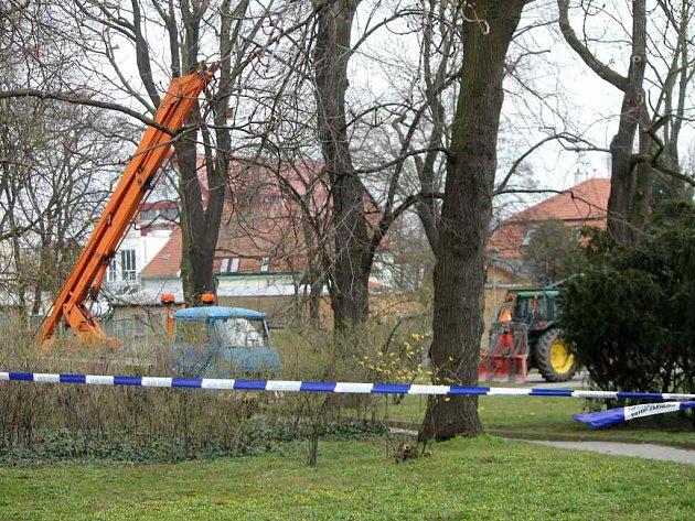Ke kácení stromů v parku Stromovka by prý muselo dojít bez ohledu na chystanou revitalizaci. Skácí ty nemocné a poškozené.