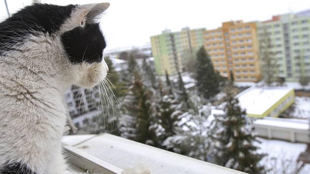 V úterý bylo v Pelhřimově pět stupňů pod nulou a padal sníh.
