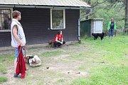 Na Želivce se usadili čtyřnozí táborníci.