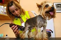 Málokdo už si stříhá pejska doma a raději ho svěří do rukou odborníkům. Častým nešvarem mnoha salonů je uspávání anestetiky. Ta jsou ale pro psí organismus nebezpečná.