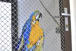 Papoušek Arnošt.