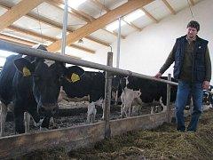Dojnice v košetickém Agropodniku dojí v předpisovém prostředí.