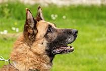 Pes Donny vyhlíží nového pána.