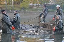 Humpolečtí rybáři pozvali širokou veřejnost na víkendové výlovy rybníků Cihelna a Dvorák. Společenskou událost si užívali všichni bez rozdílu věku.