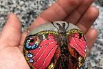Motýl babočka od Moniky Křepelové