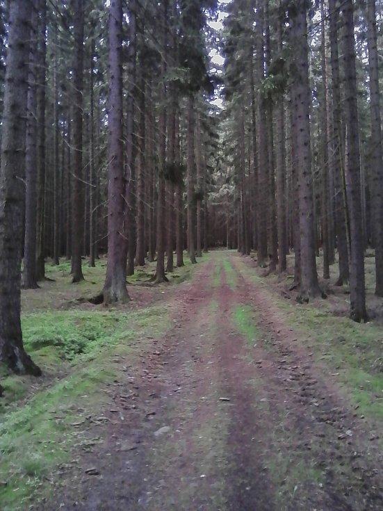 10. Nekonečná cesta nekonečným lesem