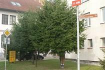 Na smrku v ulici V. B. Juhna v Pelhřimově visela figurína oběšence.