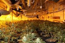 V pěstírně marihuany v Humpolci bylo 647 vzrostlejších sazenic a dalších 511 menších sazeniček.