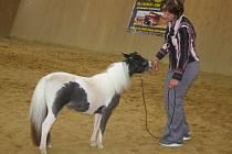 Výstava miniaturních koní v Litohošti