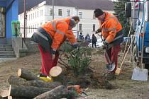 Prací spojených s likvidací dřevin se ujali pracovníci Technických služeb.