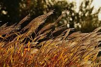 Podzim na fotografiích