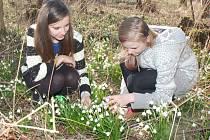 Bledule a sněženky ohlašují příchod jara.