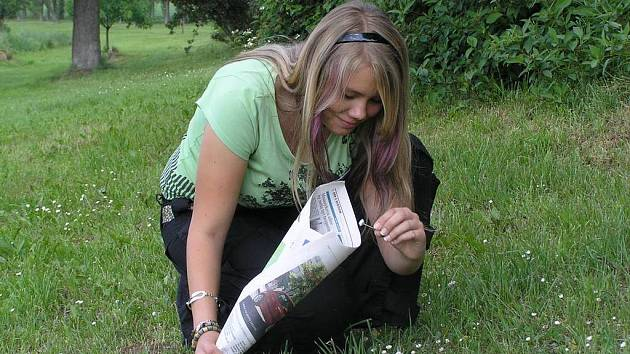 Někteří lidé si na sběru léčivých rostlin za sezonu vydělali dříve i desetitisíce.