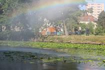 Ryby ve strachovském rybníku v Pelhřimově se kvůli nedostatku kyslíku, který jim bere stulík, dusí. Foto: