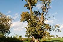Stáří Lípy malolisté v Ovčíně je odhadováno na 500 let. Obvod jejího kmene čítá zhruba 520 centimetrů.