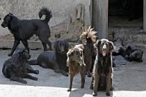 Na dvoře drážního domku v Horní Vilímči se pohybuje smečka psů