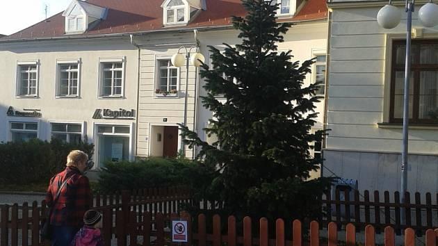 Humpolecké Horní náměstí opět zdobí jehličnatý stromek, jenž po dvou pokácených smrcích přejímá úlohu vánočního stromu města.
