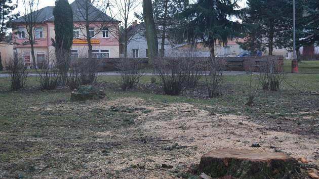 V minulých dnech začalo v humpoleckém parku Stromovka kácení stromů.