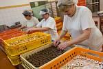 Výroba vánočního cukroví v pekárně Adélka v Pelhřimově.