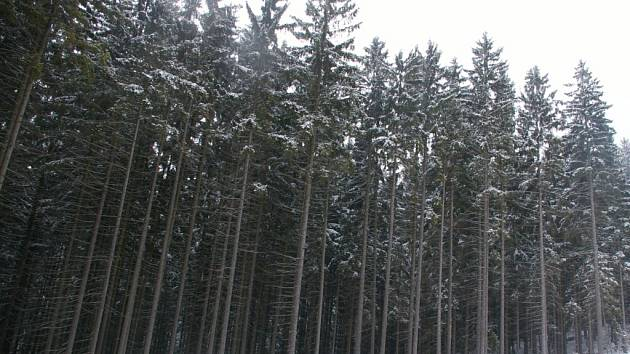 """Les leží na hranicích katastru Janovic a Veselé a je vcelku dobře """"schovaný""""."""