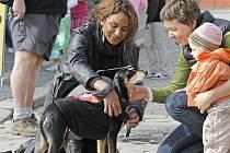 Lejla Abbasová oblékla na pelhřimovském náměstí do černého protestního trička proti bídě také svého psíka Fatyho