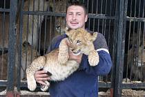 Bob Navarro Cirkus King přivezl kromě řady artistů a italské klauniády také rozsáhlý zvěřinec, jemuž vedle hadů či poníků vévodí ušlechtilí  kladrubští koně a zejména třináct somálských lvů. Bydlí tam i roztomilý lvíček Cézar (na snímku).