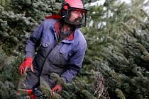 """Pavel Nepil se do pravíkovských plantáží vrátil s pilou po několika letech. """"Kdyby tady bylo půl metru sněhu, tak je ta práce daleko náročnější,"""" nestěžuje si na mírnou zimu."""
