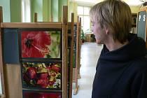 Výstava fotografií Miroslava Marka v pelhřimovské knihovně.