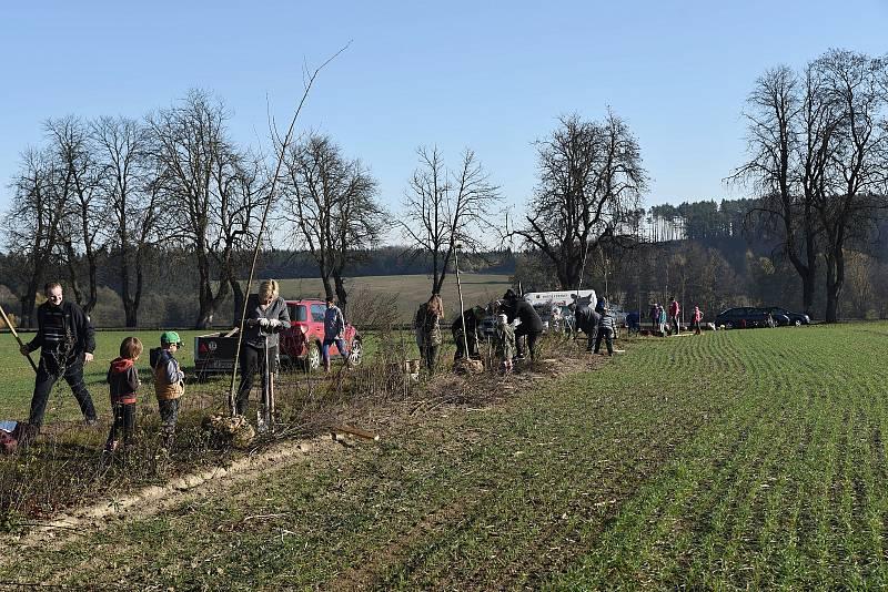 Na cestě k židovskému hřbitovu vysázeli v Horní Cerekvi v roce 2018 a 2019 45 lip.