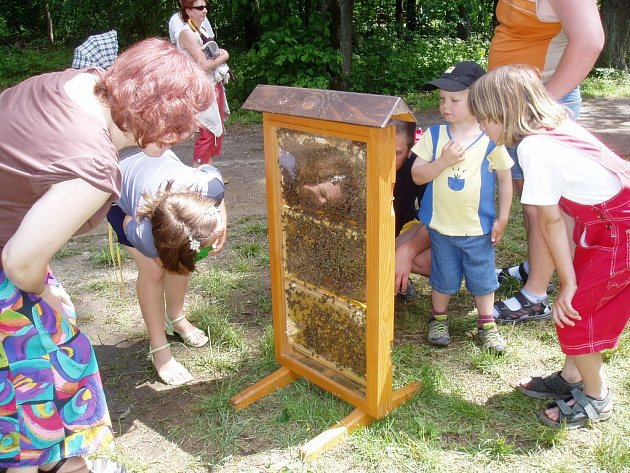 Ze života včel. Počátečtí včelaři si pro Den přírody připravili ukázku života ve včelím úlu.