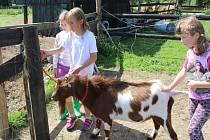 Malí táborníci se na Statku u zvířátek v Nové Bukové starají o dobytek, drůbež a domácí zvířata, také se učí vyrábět sýr nebo máslo a pomáhají s vařením. Jednou z jejich oblíbených aktivit je také skákání do sena.