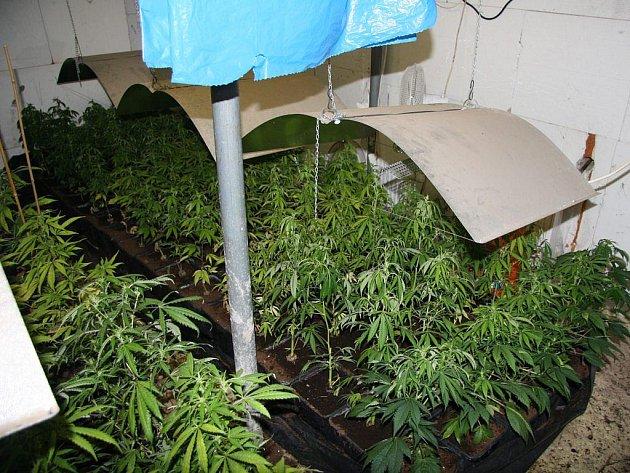 Vnitřní pěstění zajišťovaly výkonné lampy