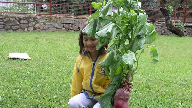 Maxiředkvička. Zahradnický počin drží vnučka pěstitele Katka Suková.