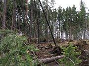 ŽIROVNICKO. Zničený les v okolí Ctiboře