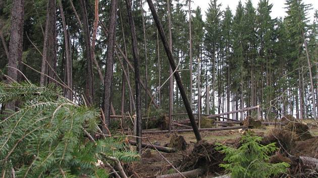 Popadané stromy zastavily v Bácovickém kopci na více jak dvě hodiny silnici z Pelhřimova do Červené Řečice.