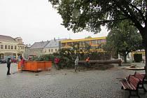 Ve čtvrtek skáceli smrk, který na náměstí rostl už ve 40. letech 20. století. Měřil kolem dvaceti metrů.