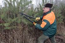 Lesníci v Bílovicích nad Svitavou se letos brání krádežím stromků stříháním části větví.