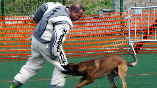 Mistrovství světa belgických ovčáků v Písku. Ilustrační foto.