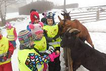 Děti z mateřinky na Hradišti v Písku si užily zimní školu v přírodě.