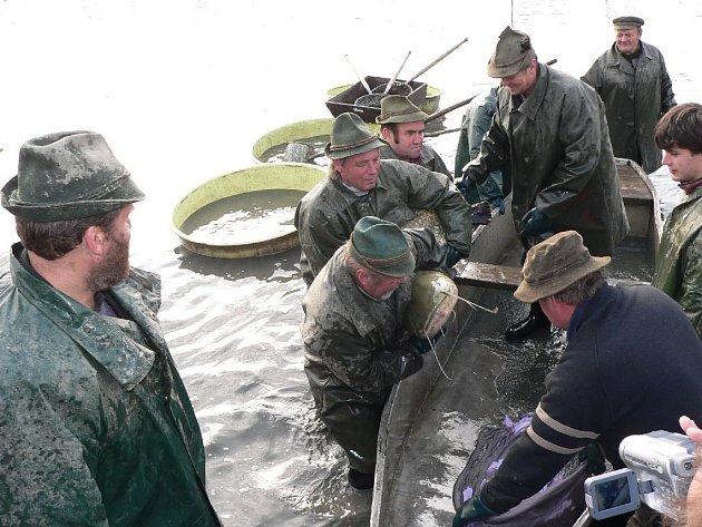Kapitální sumec dal rybářům zabrat