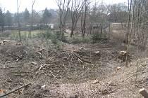 PREMONSTRÁTI vykáceli staré a nebezpečné stromy a náletové dřeviny. Pozemek budou zalesňovat.