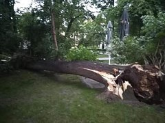 V Palackého sadech v Písku spadl strom.