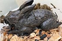 Vystrašené mládě zajíce nakonec i přes snahu zvířecích záchranářů uhynulo.