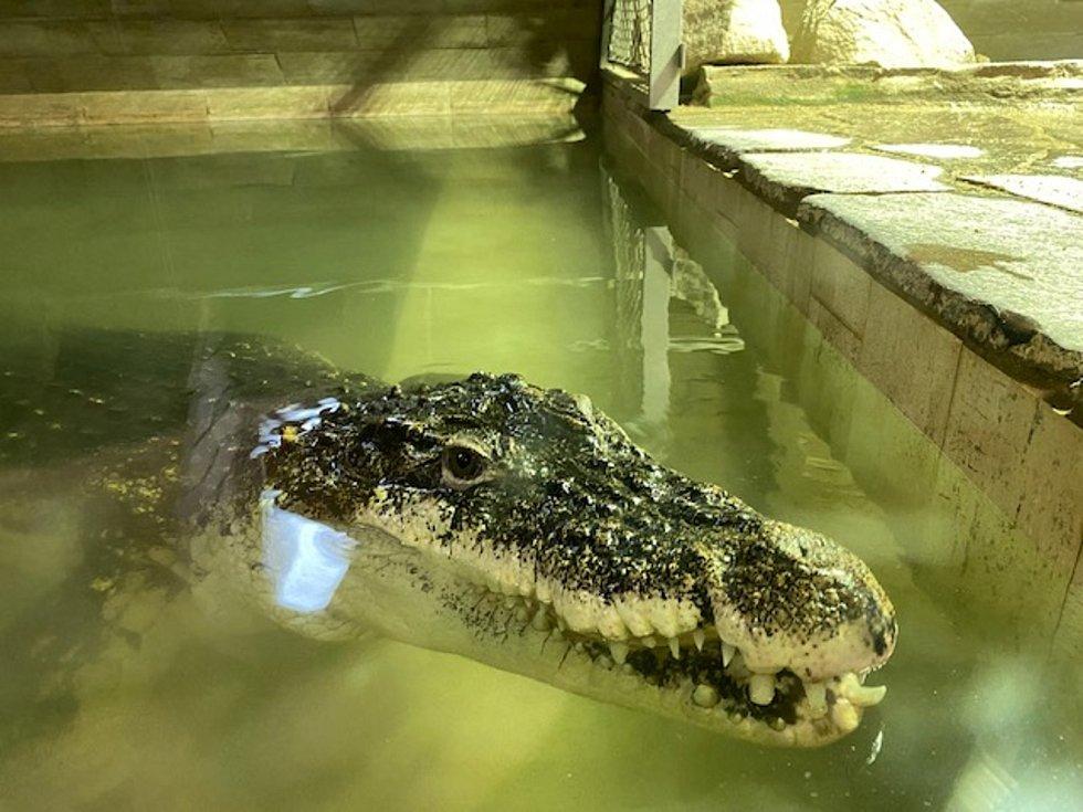 Krokodýli v Protivíně se nudí, vyhlížejí návštěvníky.