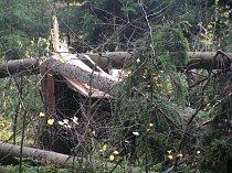 Do lesů se nesmí! Radnice vyhlásila zákaz vstupu