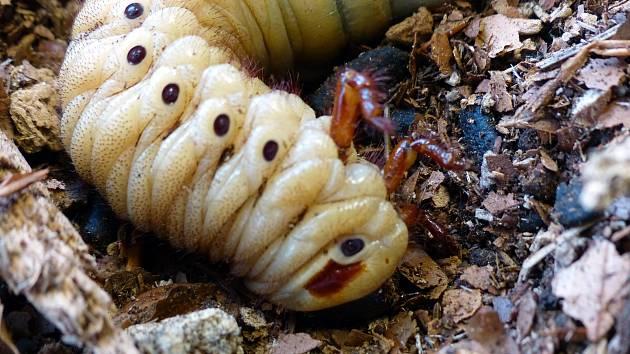 Pohledy do světa hmyzu a bezobratlých živočichů  v ZŠ Sepekov.
