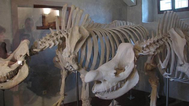 V Zoologickém muzeu...