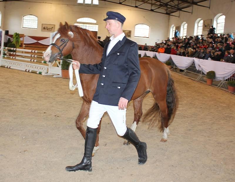 Druhá jarní přehlídka plemenných koní v Zemském hřebčinci Písek.